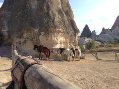 Time for today's sunset tour! #horses #Cappadocia #goreme #lovefromturkey #widenyourworld #traveldeeper