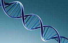Muitos pais ainda têm dúvidas sobre o potencial e importância de se armazenar as células-tronco dos filhos. Esperança de cura para diversas doenças, elas são de extrema importância para a chamada medicina regenerativa. Pensando nisso, a R-Crio, Centro de Tecnologia Celular especializado em armazenar as células-tronco da polpa do dente de leite, elencou cinco diferenças práticas entre as células-tronco encontradas na polpa dos dentes e no sangue do cordão umbilical, além do potencial de cada…