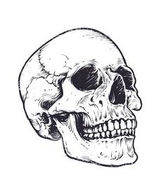 Find Anatomic Skull Vector Art Detailed Handdrawn stock images in HD and millions of other royalty-free stock photos, illustrations and vectors in the Shutterstock collection. Totenkopf Tattoo Mann, Totenkopf Tattoos, Skeleton Drawings, Skeleton Art, Skull Stencil, Skull Art, Bird Skull, Tattoo Drawings, Art Drawings