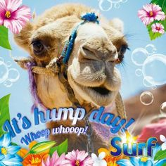 Hump Day!!🐫 Wednesday Greetings, Wednesday Hump Day, Good Morning Wednesday, Wednesday Humor, Funny Greetings, Wednesday Coffee, Hump Day Quotes, Hump Day Humor, Morning Love Quotes
