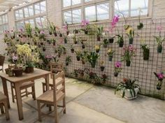 How To Create A Natural Orchid - Home Cleaning Orchid House, California Garden, Orchids Garden, Orchidaceae, Shed Design, Green Garden, Garden Styles, Garden Inspiration, Houseplants