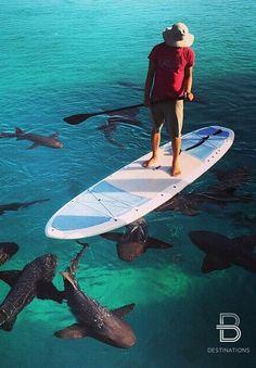 SHARKS <3  -  Blue Ocean - Sharks