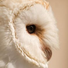 an owl, white, brown Hogwarts, Beautiful Owl, Animals Beautiful, Harry Potter Aesthetic, Snowy Owl, Character Aesthetic, Greek Gods, Owl House, Cute Animals