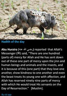 "mercies of Allah on the Day of Resurrection"" Prophet Muhammad Quotes, Hadith Quotes, Quran Quotes, Truth Quotes, Islam Hadith, Islam Muslim, Islam Quran, Prayer Verses, Quran Verses"