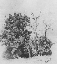 ivan shishkin drawing