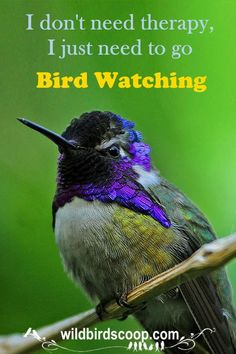 Bird watching is an exciting fulfilling hobby for all ages. Everyone can enjoy watching and learning about birds whether in your backyard or out on a walk. There are no end to birds to see. Penguin Bird, Penguin Craft, Wild Birds Unlimited, Bird Feeding Station, Viewing Wildlife, Baby Penguins, Goat Farming, Great Hobbies, Humming Bird Feeders