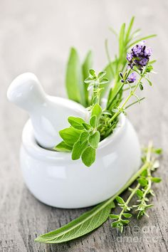 Herbs:  Herbs In mortar & pestle. Every herb gardener should have a mortar & pestle.  This is just an image.