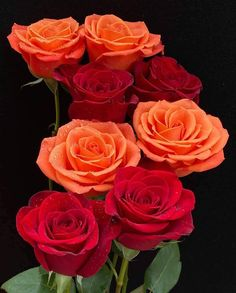 Beautiful Rose Flowers, Beautiful Flower Arrangements, Beautiful Flowers, Champagne Centerpiece, Mothers Day Roses, Ecuadorian Roses, Good Night Flowers, Color Wallpaper Iphone, Birthday In Heaven