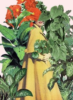 HORTICULTURE - BETH HOECKEL