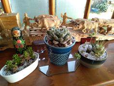 Aquí te muestro ideas sencillas para decorar con suculentas, son muy fáciles! #jardín #suculentas #deco #plantas Ideas Sencillas, Planter Pots, Deco, Succulent Arrangements, Plants, Decor, Deko, Decorating, Decoration