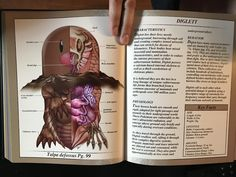 Image result for pokemon anatomy