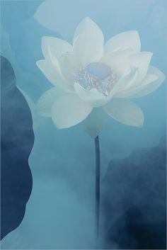 White Lotus Flower Surreal Series