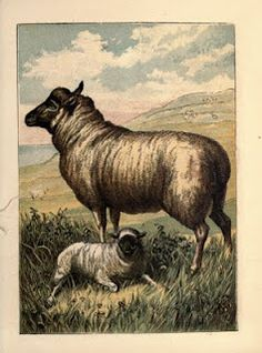 Sheep. Ewe and lamb on hillside, 1870.