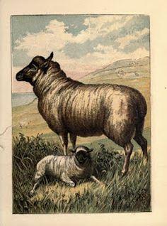 Sheep, 1870
