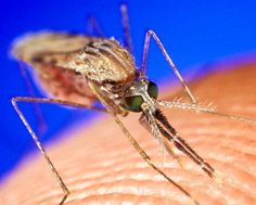 A cure for malaria gets closer