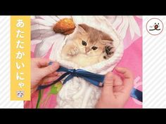 【うっとりしちゃうニャ。】タオルで包まれた子猫ちゃん。このあと見せた、安心した表情が…(♡o♡) | PECO(ペコ)
