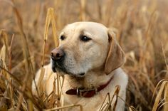 Herbal Tick Repellent for Dogs | Care2 Healthy Living