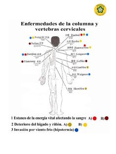 Hijama Cupping, Cupping Therapy, Gua Sha, Vértebra Cervical, Mudras, Acupuncture Points, Alter, Anatomy, Graffiti