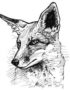A quick fox sketch by silvercrossfox.deviantart.com on @DeviantArt