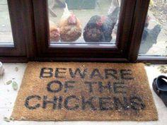 Beware the Chickens!