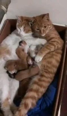 Cute family #kittens #adorablekittens #kitty #cat Cute Funny Animals, Cute Baby Animals, Funny Cats, Wild Animals, Cats Humor, Funny Horses, Nature Animals, Cute Animal Videos, Funny Animal Pictures