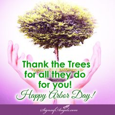 Today is the day designated to plant a tree. If you can't, at least thank the trees for all they do for you.   ~ Karen Borga, The Angel Lady