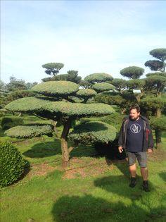 Bonsai Park, Garden Center, ogród, tree, japanese, drzewa, krzewy, rośliny, orientalne, niwaki, juniperus, pinus, acer, carpinus, centrum ogrodnicze,