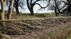 A beautiful woven living hedge