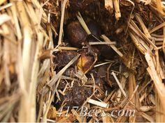 Ash Grove, Save The Bees, Beekeeping, Stuffed Mushrooms, Meat, Future, Vegetables, Food, Stuff Mushrooms