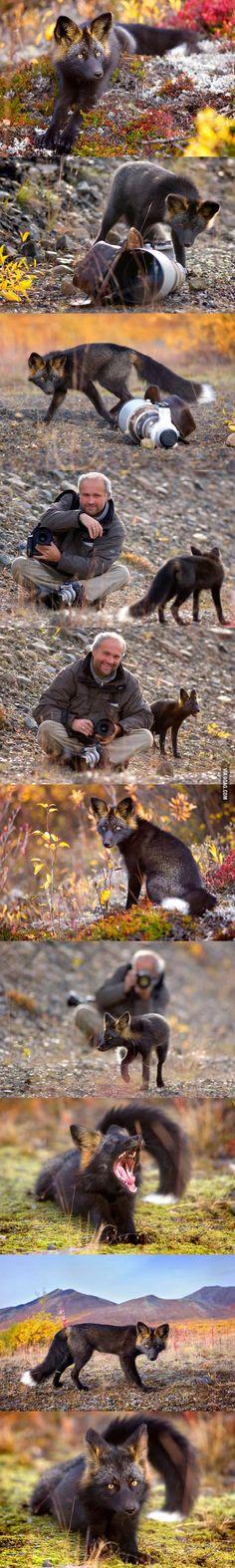 Ungewöhnliche Freundschaften - Fuchs und Kameramann