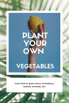 We have compiled a guide on how to make plants and vegetables out of things from the fridge. It is both an activity that is fun alone or with the children. A bit of biology / nature engineering teaching and then it even gives vegetables later in the summer. Biology, Avocado, Planters, Engineering, Teaching, Activities, Vegetables, Children, Nature