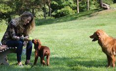 blake lively dog lover - Image Credit: Just Jared