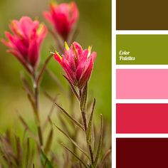 bright scarlet, brown, burgundy, chocolate, color of wine, dirty green, green, marsh, marsh brown, pastel pink, pink, Red Color Palettes.