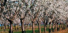 80% of French Almond production comes from the French Riviera... let's go!