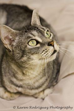 Adopt a shelter pet today!