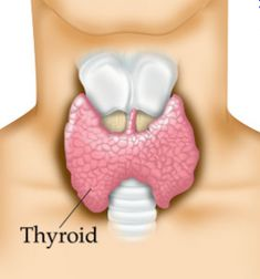 Thyroid foods - What to eat/avoid with hypothyroidism