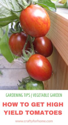 Are you thinking about sprucing out your porch or patio? Well, container gardening is one of the best ways to keep your garden looking beautiful, regardless of the space. Try these container gardening tips for the. Growing Tomatoes Indoors, Growing Tomato Plants, Growing Tomatoes In Containers, Growing Vegetables, Grow Tomatoes, Gardening Vegetables, Tomato Fertilizer, Growing Gardens, Home Vegetable Garden