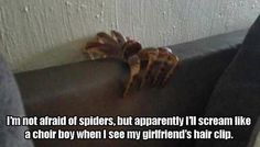 Funny Pictures Of The Day - 33 Pics No I'm scared of spiders I would just run if a I see one