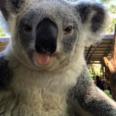 This cheeky girl couldn't get enough of her clay feed ;) #cuteanimalselfie…