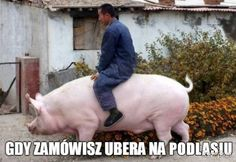 Chinese millennials and giant pigs sponsored by Xi Jinping Funny Facts, A Funny, Funny Jokes, Funny Laugh, Funny Gifs, Stupid Funny, In China, Funny Images, Haha