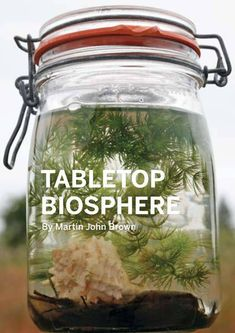 shrimp and snail Biosphere. I like this and wow the kids love it. This is a jar full of surprises and kids line up for it.