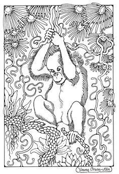Afbeeldingsresultaat voor dandi palmer