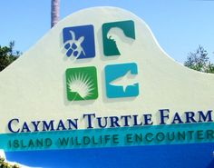 "My friend and I had the amazing opportunity to live in Grand Cayman for a month (January 18th - February 18th. Perfect timing right?), and one of the things on our ""Must Do"" list was to go to the Cayman Turtle Farm."