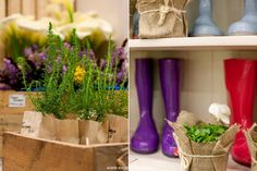 2013 Cape HOMEMAKERS Expo - gardening