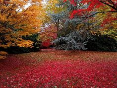 David Getty captured the autumn colours at Sheffield Park, East Sussex England's Big Picture: Best of 2019 - BBC News Sheffield Park, England Countryside, Urban Beauty, Picture Boards, Image Caption, East Sussex, North Yorkshire, Pictures Images, Big Picture