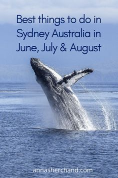 Top things to do in Sydney Australia in June, July & August – Anna Sherchand Brisbane, Melbourne, Visit Australia, Sydney Australia, Australia Travel, Cool Places To Visit, Places To Travel, Captain Cook Cruises, Travel Guides