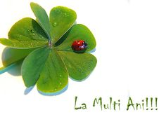 La multi ani! Mirela Happy Birthday Cards, Image Search, Plant Leaves, Plants, Fiery Red, Profile, Collections, Facebook, Drawings