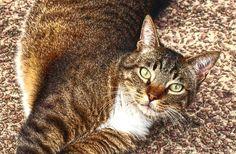 LA GATITA DE BIRIATOU - Dedicada a todos los amigos que suben fotos  de gatas y gatos en Panoramio.