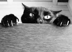 Cats are truly evil and here is the photo essay to prove it. ;) (Srsly. Check out the pics.)