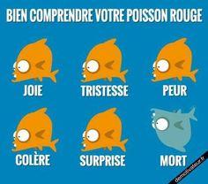 Aaaaaah...! C'est pour ça que Marcel est tout bleu...?